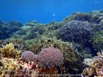 Phils_Moalboal_023_Coral-Gardens_PC200691_.JPG