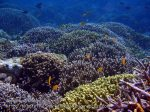 Phils_Moalboal_026_Coral-Gardens_PC200728_.jpg