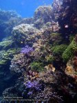 Phils_Moalboal_029_Coral-Gardens_P2041927_.jpg