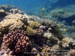 Phils_Moalboal_032_Coral-Gardens_PC150186_.JPG