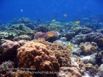 Phils_Moalboal_035_Coral-Gardens_PC160241_.jpg