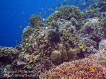 Phils_Moalboal_038_Coral-Gardens_PC160289_.JPG