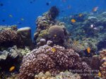 Phils_Moalboal_041_Coral-Gardens_PC160305_.JPG