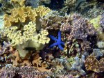 Phils_Moalboal_046_Coral-Gardens_P2041937_.jpg