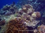 Phils_Moalboal_053_Coral-Gardens_PC160281_.JPG