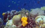 Phils_Moalboal_071_Coral_PC200831_.jpg