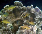 Phils_Moalboal_074_Coral_PC200712_.jpg