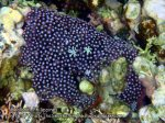 Phils_Moalboal_084_Coral_PC200768_.jpg