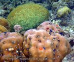 Phils_Moalboal_086_Coral_PC180360_.jpg