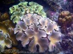 Phils_Moalboal_095_Soft-Coral_PC180480_.jpg