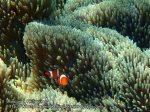 Phils_Moalboal_187_Full-Banner-Nemo_P2021611_.jpg