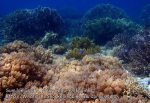 Phils_Sumilon_065_Reef_P1301326.JPG