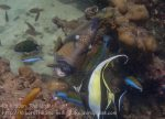 327_Titan-Triggerfish-and-friends_p1145580.jpg