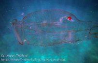 367_Jellyfish_img_3885_.jpg