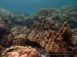 Thai_Lipe_164_K_Shallows_PB280369_.jpg