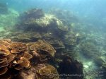 Thai_Lipe_172_K_Shallows_PB280313.JPG
