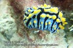 Thai_Ngai_v3_033_D-Nudibranch_P1197142.JPG