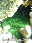 Algae_P7090484.JPG