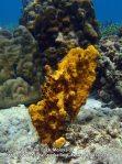 Sponge_P7090451_.JPG