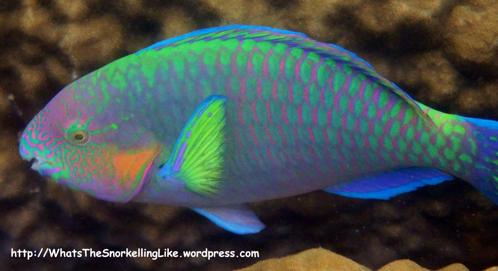 Thailand_Commonfish | WhatsTheSnorkellingLike