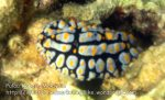017 Nudibranch_IMG_1185.jpg