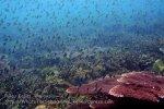 021 A-Coral_P8163407_.jpg