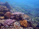 022 A-Coral_P8163411_.jpg