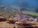 062 CD-cuttlefish-group-hands-up_P8163186.JPG