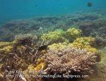 205 L-Coral_IMG_1787_.jpg