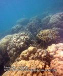 231 M-Coral_IMG_1027.jpg