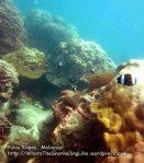 232 M-Coral_IMG_1026_.jpg