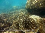 270 O-Coral-West-of-O_IMG_1082.jpg