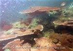 278 OP_Coral-East-of-O_IMG_1098.jpg