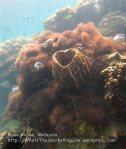 280 OQ-Coral-Near-the-Beach-OQ_IMG_1106.jpg