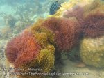 281 OQ-Twotone-Anemones-Near-the-Beach-OQ_IMG_1137.jpg
