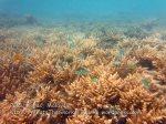 285 OQ-Coral-Near-the-Beach-OQ_IMG_1155.jpg