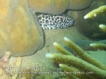 288 QP-Coral-Near-the-Beach-OQ_IMG_1214.jpg