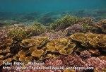 296 RST-Coral_IMG_1824_ processed.jpg