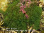 302 GN-Seagrass-IMG_1850.jpg