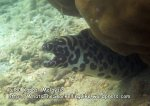 303 ST-Honeycomb-moray_IMG_1883.jpg