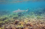304 RST-Inquisitive-Shark_IMG_1890.jpg