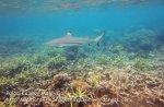 304 RST-Inquisitive-Shark_IMG_1890.jpg