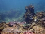 327 X-Coral-Near-Beach_P8163286.JPG