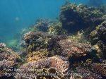 328 X-Coral-Near-Beach_P8163285.JPG
