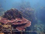 332 Y-Coral-at-Y_P8163328.JPG