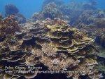 333 Y-Coral-at-Y_P8163324.JPG