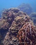 334 Y-Coral-at-Y_P8163315.JPG