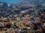 337 Y-Coral-at-Y_P8163330.JPG