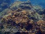 338 Y-Coral-at-Y_P8163323.JPG