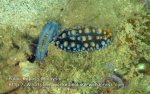 806 GC-Nudibranch-party_IMG_1420.jpg